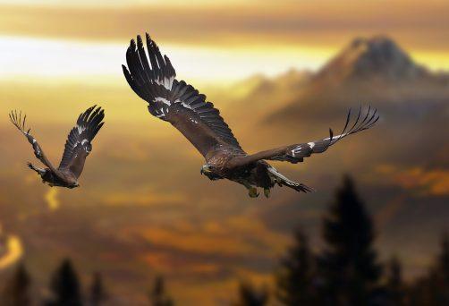 Die Gabe des Adlers – ein Eskimomärchen aus Alaska